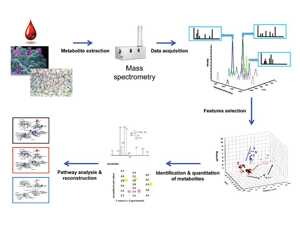 metabolomics schematic